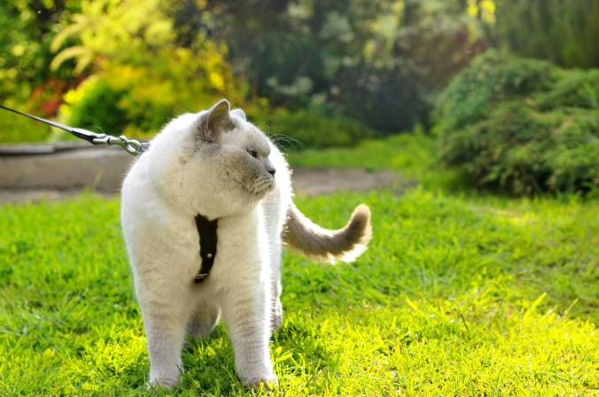 07-train-cat-walk-on-a-leash