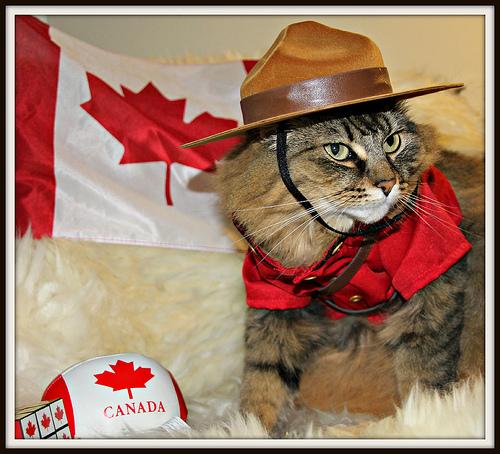CanadaDayCatMountie_zps9c3c7164